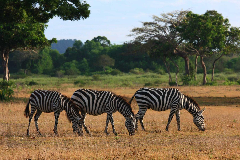 Calauit Safari Park Tour Package