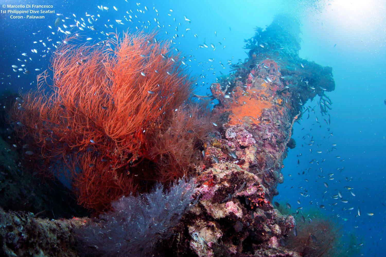 Coron Reefs and Wrecks