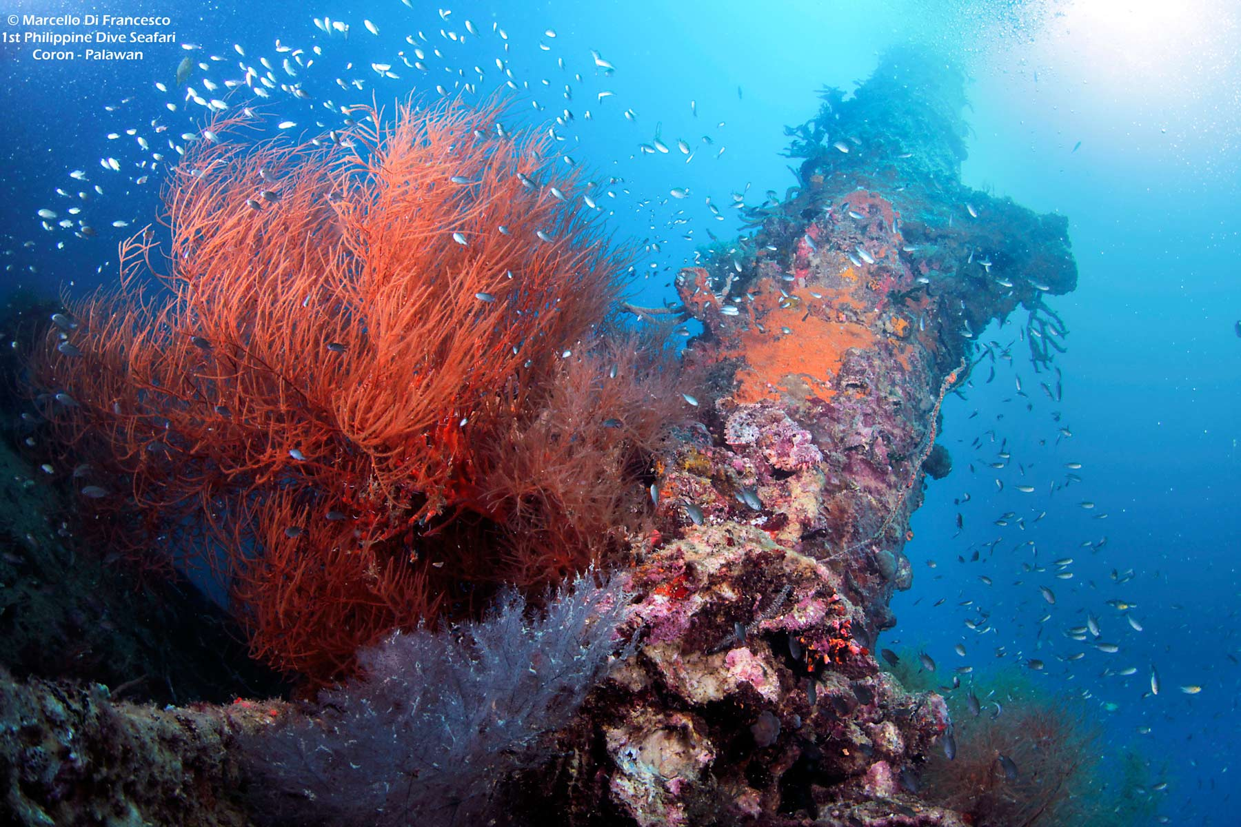 Coron Reefs and Wrecks