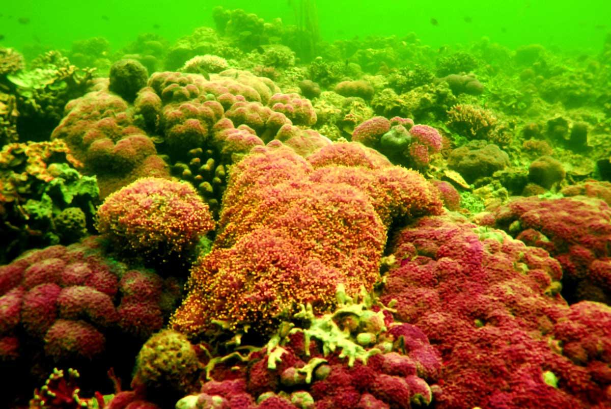 Bogor Coral Garden